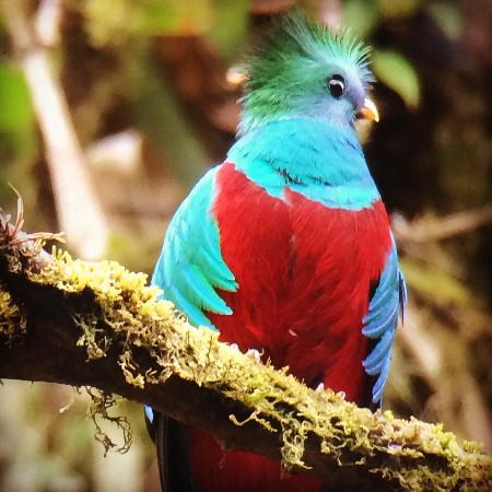 Comidas Típicas Miriam: Quetzal