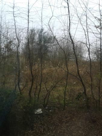 Travelodge Manchester Trafford Park : view from bedroom!