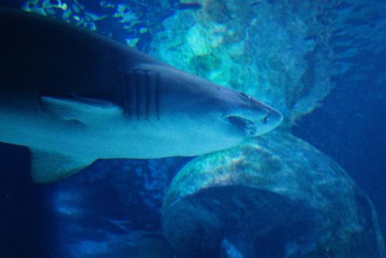 sea aquarium photo de sea aquarium londres tripadvisor