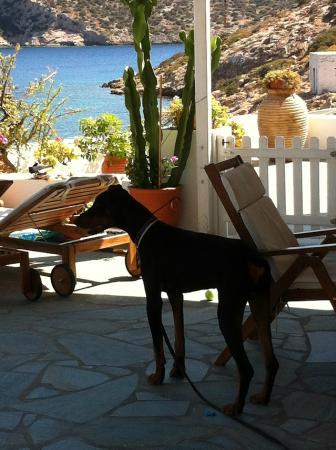 Archipelago Seaside Apartments: χώρος ξενοδοχείου