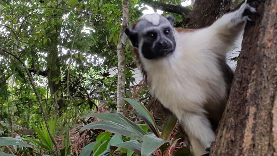 Mateo's B&B : One of the resident monkeys