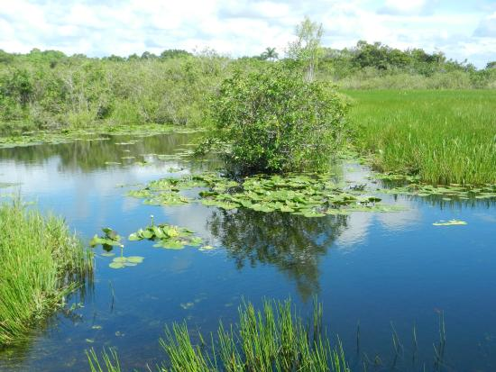 Tours in the Glades: Swampy area in the glades, seen from the kayak