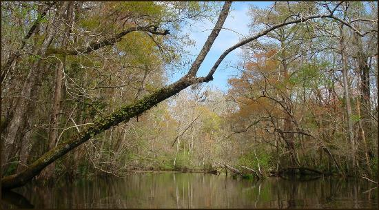 McClellanville, Carolina Selatan: Wambaw Creek - Easy Paddling