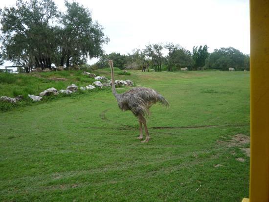 Busch Gardens [Safari]
