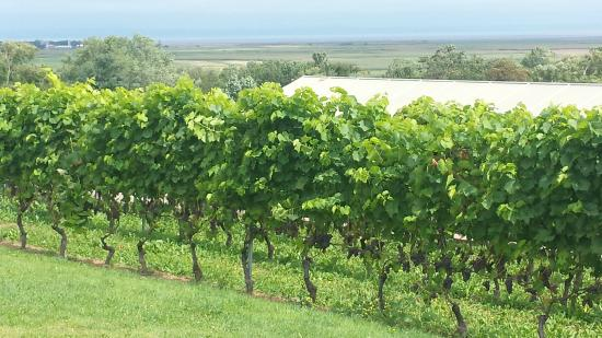 Domaine de Grand Pre: Walking by the vineyards.