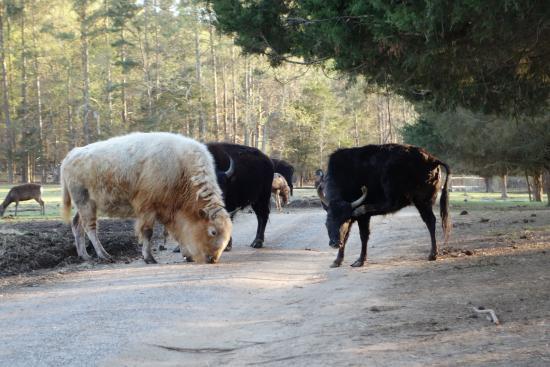 Harmony Park Safari: Big animals