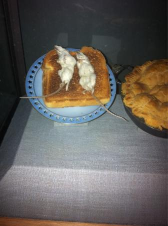 Museum of Jurassic Technology: Eating mice on toast was supposed to cure bed wetting.