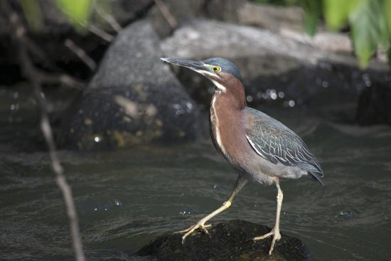 Central American Tours: Heron