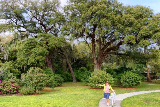 Charles Pinckney National Historic Site: Walking the grounds