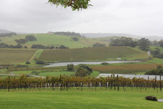 Oak Room Eleven: View from the Winery