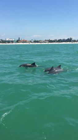 Adventure Cruises Inc.: Dolphins on the cruise��