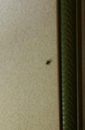 Quality Inn Spring Mills - Martinsburg North: Spider crawling behind the mirror