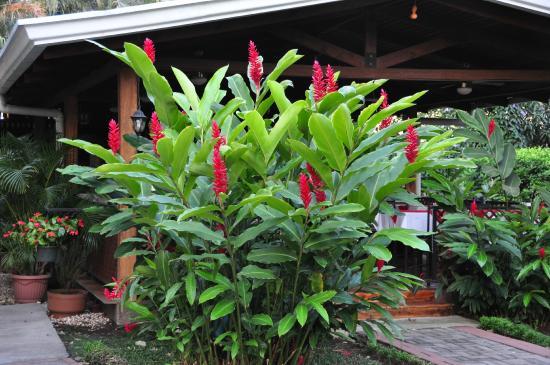 Alajuela, Costa Rica: Hotel Grounds