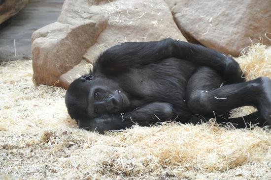 Prague Zoo : отдых)