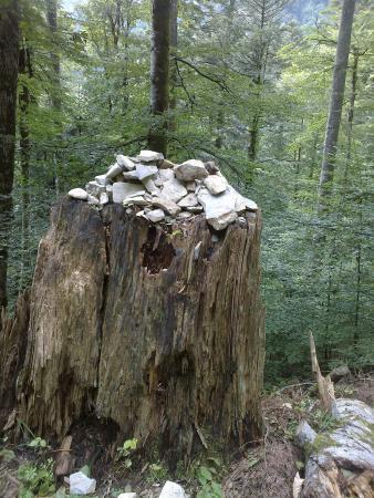 Musée de la Grande Chartreuse: nel bosco secolare