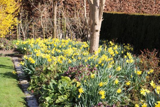 B&B 42 Zepperen: Lente in de tuin