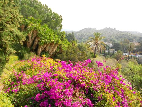 desértico - Picture of La Concepcion Jardin Botanico Historico de Malaga, Mal...