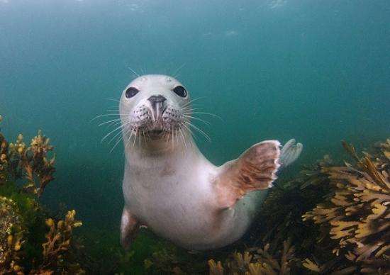 Seacoast Safaris: Seal
