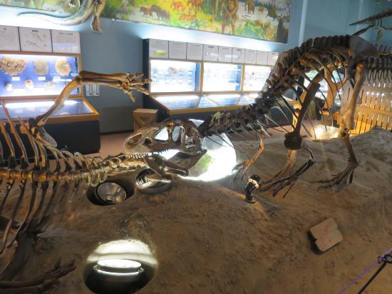 Shinshu Shinmachi Fossil Museum