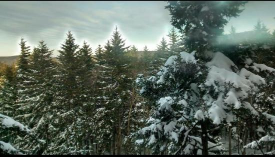 Logger's Run Townhomes: View from deck