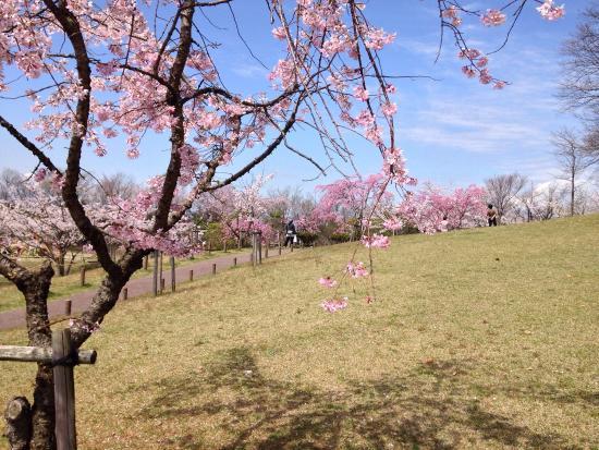 Fujigaoka Design Park
