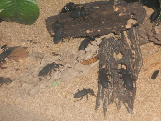Siracusa, estado de Nueva York: Creepy-crawlies display