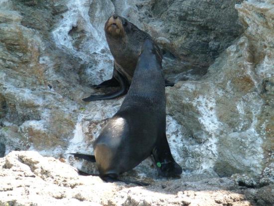 นิวพลีมัท, นิวซีแลนด์: Seals