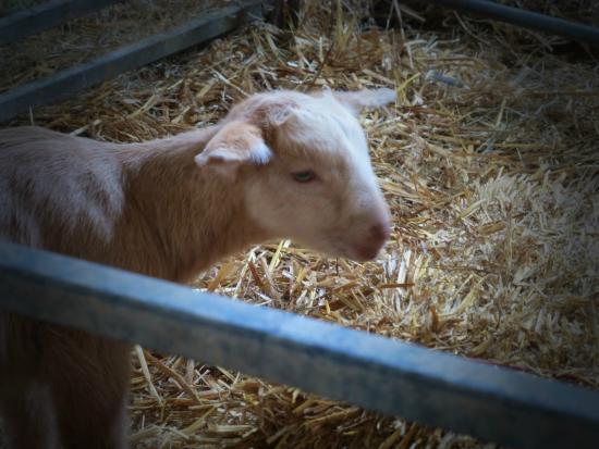 Shortwood Farm: Spring lamb