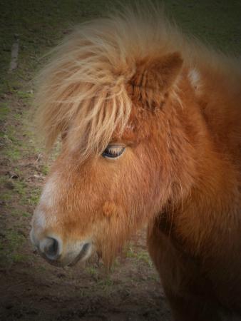 Shortwood Farm: Bad hair day!