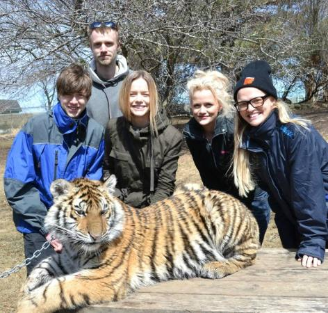 Orono, Kanada: Where can you go to touch a live tiger? (also Jungle Cat World)