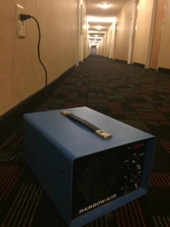 Best Western Windsor Inn & Suites: Smelly hallway