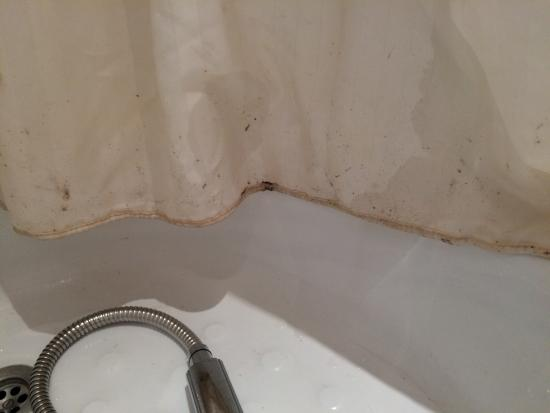 Burford Lodge: Bathroom shower curtain