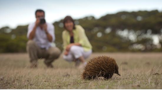 Kangaroo Island Accommodation Reviews