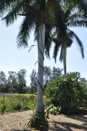 Bradenton, FL: Palma Sola Botannical Garden - Exotic fruit tree exhibit