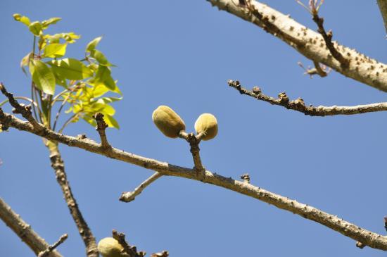 Bradenton, FL: Palma Sola Botannical Garden