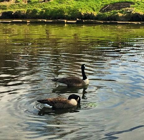 Golders Hill Park: Wildlife at Golders Hill