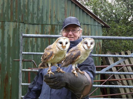Falconry Experience Wales: My favorite