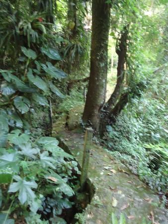 Pousada Canto do Curio: trilha para cachoeira