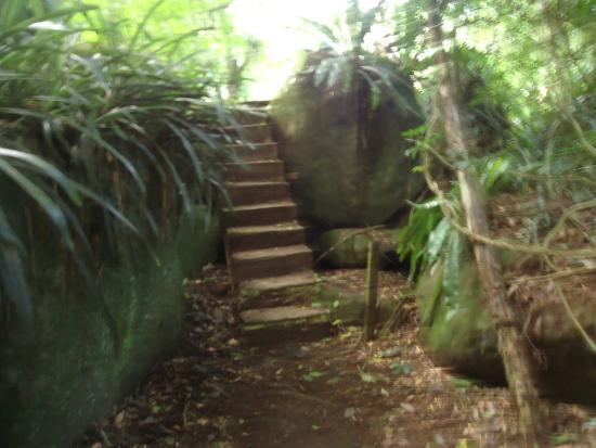 Pousada Canto do Curio: trilha para a cahoeira