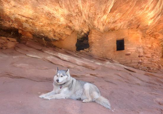 Mule Canyon Ruins: Even our dog liked it