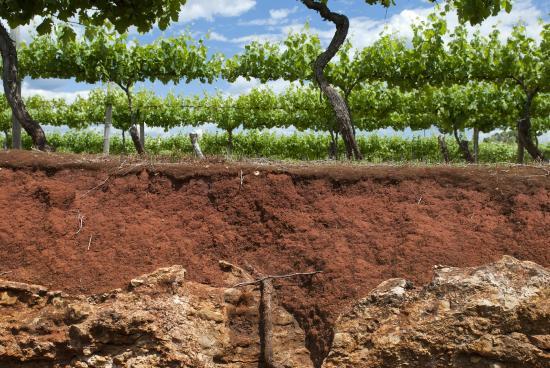 Image result for terroir soil