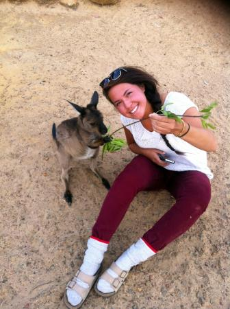 Eleanor River Homestead - Kangaroo Island: Feeding the roos