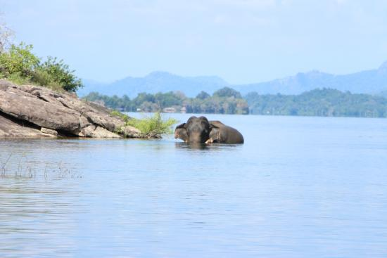 Gal Oya National Park - The Crossing: the giant coming out