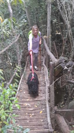 Saamrus Guest Farm: Our blind cocker spaniel going over the wooden bridge.