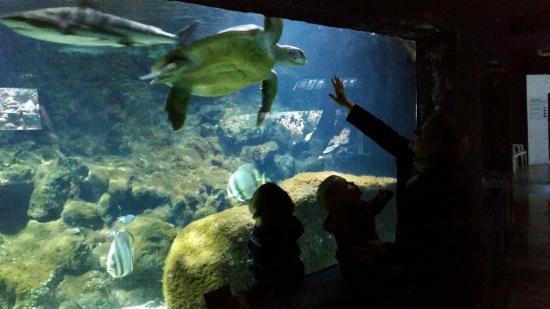 requins et tortue font bon m 233 nage picture of aquarium du cap d agde cap d agde tripadvisor