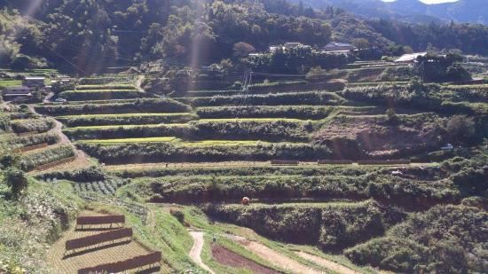 Tokubetsuto Rice Terraces