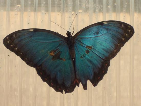 The North Somerset Butterfly House: Butterfly