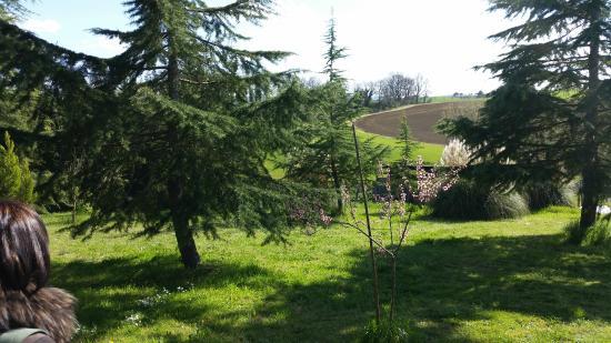 Agriturismo Il Colombaio: Vista di parte del giardino