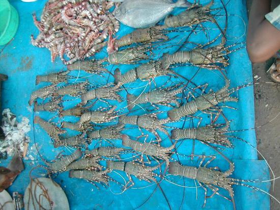 Digha Mohana Fish Market