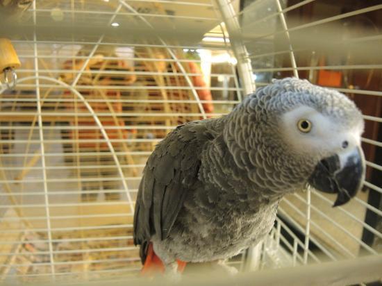 Grand Hilarium Hotel: В Отеле в Холле живет такой вот чудесный попугайчик, любит, когда его чешут за шейкой :)